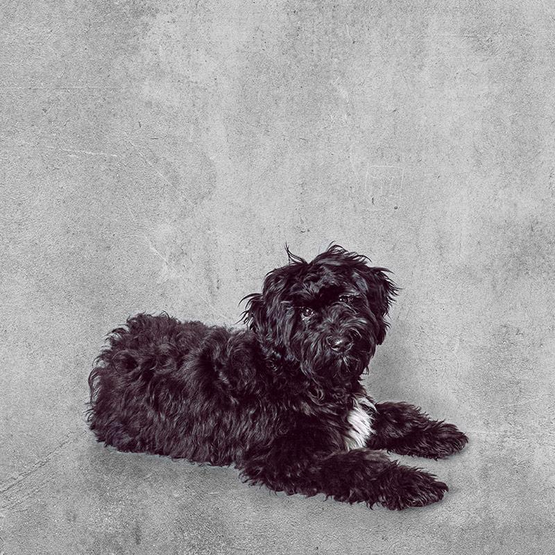 Ella · Unser Bürohund